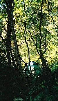 Honeyman State Park Camp