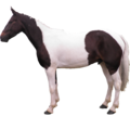HorseSideView.png