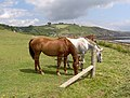 Horses, Wembury in background - geograph.org.uk - 254341.jpg