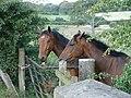 Horses on Bushelhead Road - geograph.org.uk - 525637.jpg