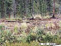 Hosford Creek Water Quality Testing, Yukon-Charley Rivers, 2003 2 (626b35a1-4d78-451e-a77e-7829aaf08a5d).jpg