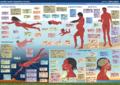 Human Aquatic Adaptations.png