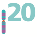 Human chromosome 20 from Gene Gateway - no label.png