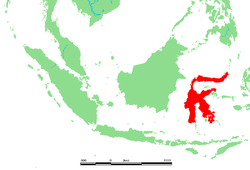 ID - Sulawesi.png