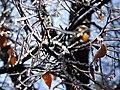 Ice day 09 - panoramio.jpg