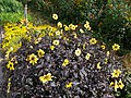Il giardino della casa di Monet - panoramio (1).jpg