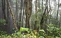 Ilha das Flores P5290316 (35199654503).jpg