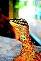 Indonesian Lizard.jpg