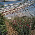 Interieur rozenkas - Aalsmeer - 20404555 - RCE.jpg