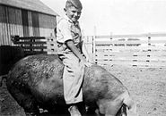Iowa Farm Boy riding hog, 1941