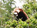 Ishikawa Zoo - Animals - 39 - 2016-04-22.jpg