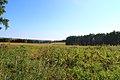 Iskitimsky District, Novosibirsk Oblast, Russia - panoramio (21).jpg