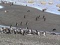 Isla Magdalena,Chile - panoramio.jpg