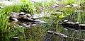 Isole Brissago 16 apr 2016 3742.jpg
