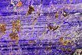 JadéiteItalieVal d'Aoste Don. Saussol Jadeite MuséumHistoireNaturelleLilleGLAM2016a8.jpg