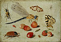 Jan van Kessel - A Dragon-fly, two Moths, a Spider and some Beetles, with wild Strawberries.jpg