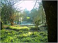 January Frost Botanic Garden Freiburg - Master Botany Photography 2014 - series Germany Diamond pictures - panoramio (1).jpg