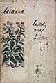 Japanese Herbal, 17th century Wellcome L0030050.jpg