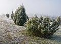 Jardín Botánico Olarizu 25.jpg