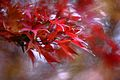 Jardin japonais Toulouse (8603278970).jpg