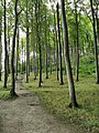 Jasmund National Park 40.jpg