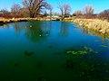 Jenni ^ Kyle Preserve Pond - panoramio (1).jpg