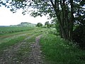 John Bunyan Trail towards Sharpenhoe - geograph.org.uk - 437900.jpg