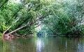 Johns River-27527-2.jpg