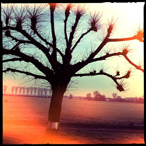 This hipstamatic by François Besch shows a tree located at Bivange  (Grand-Duchy of Luxembourg)