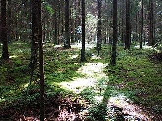 Medeina - Forest is the dominion of Medeina
