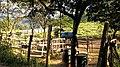 Jundiaí - State of São Paulo, Brazil - panoramio (53).jpg