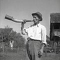 """Jurgalič Jože, Groblje 26 """"pastir"""" (67 let), nekdaj črednik, trobi na kravji rog 1952 (3).jpg"""