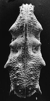 Absolute Datierung der Fossiliendefinition