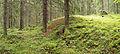 Jyväskylä - forest in Ristikivi 2.jpg