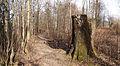 Jyväskylä - tree stump.jpg