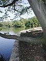 Köln-Lindenthal-Sanierung-der-Uferzonen-im-Stadtwald-002.JPG