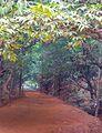 Kasturba Rd, Matheran, Maharashtra 410102, India - panoramio (8).jpg