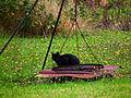 Katze neben dem Grill - wann kommt die Maus?.JPG