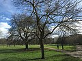 Kensington, London, UK - panoramio (32).jpg