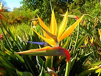 Kirstenbosch National Botanical Garden by ArmAg (8).jpg