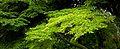Koyasan 高野山 (Wakayama-Japan) (4951355714).jpg