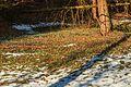Kvetoucí sněženky v PP Sněženky ve Vysokém lese 51.jpg