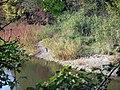Kyjský rybník (5).jpg