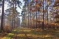 LSG Forst Rundshorn IMG 2312.jpg
