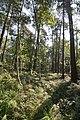 LSG Forst Rundshorn nahe Würmseeweg IMG 9885.jpg