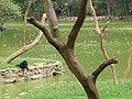 Lago Zoo de SP - panoramio.jpg