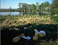 Landschap - Leie te Deurle - 357993 - onroerenderfgoed.jpg