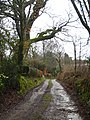 Lane at Trecombe - geograph.org.uk - 1763540.jpg