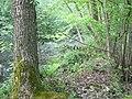 Langenfeld Nähe Haus Graven 0008.jpg