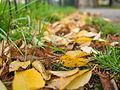 Late autumn leaf litter (11162242396).jpg